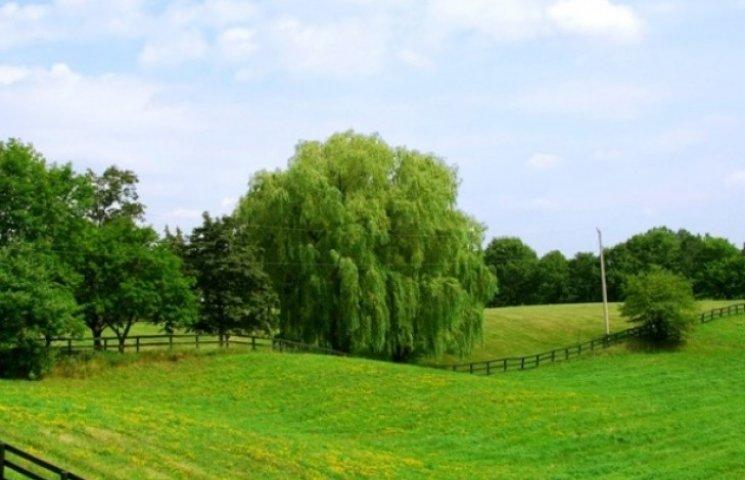Половина учасників АТО з Вінниччини вже отримали земельні ділянки