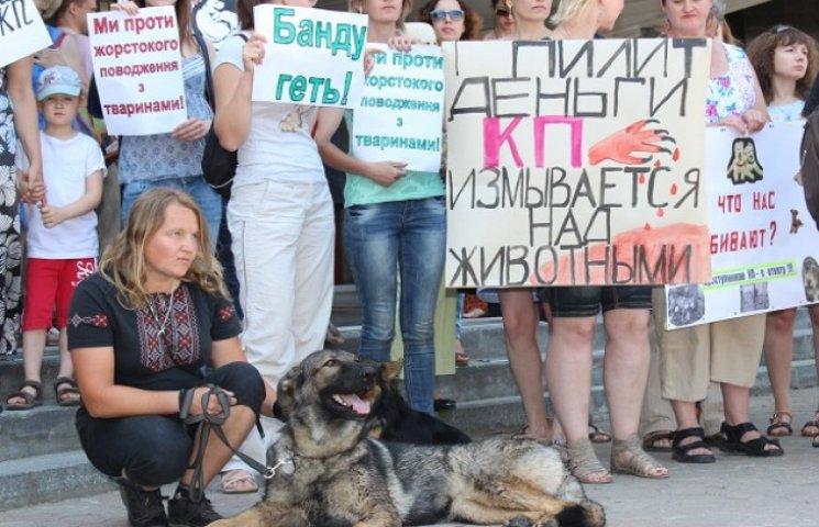 Дніпропетровський комунальник кудись подів більше мільйона гривень для бездомних тварин (ФОТО)
