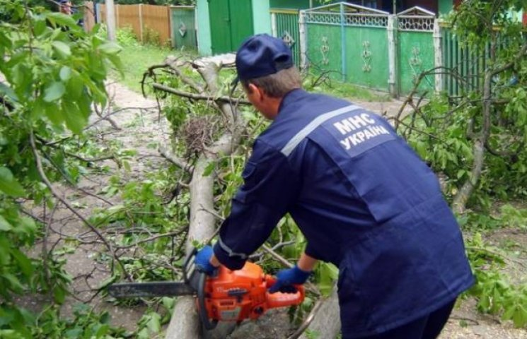 Сильний вітер у Вінниці повалив десяток дерев