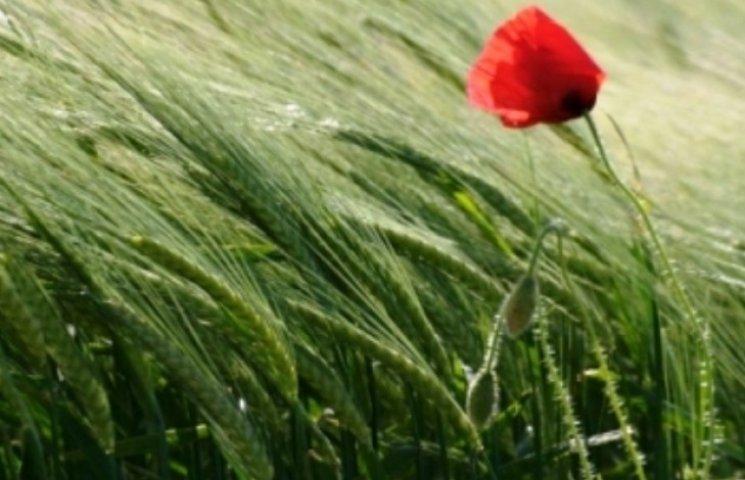 Закарпаття: прогноз погоди на 16 червня - усе вирішують вітри