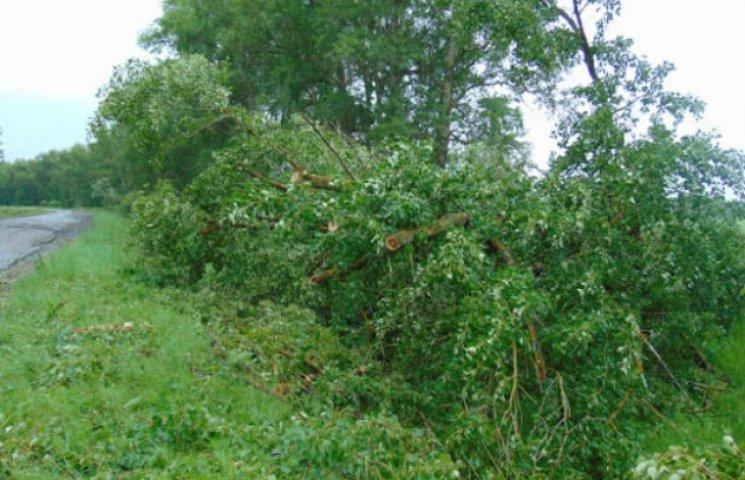 На Сумщині буревій поламав дерева і дахи шкіл (ФОТОФАКТ)
