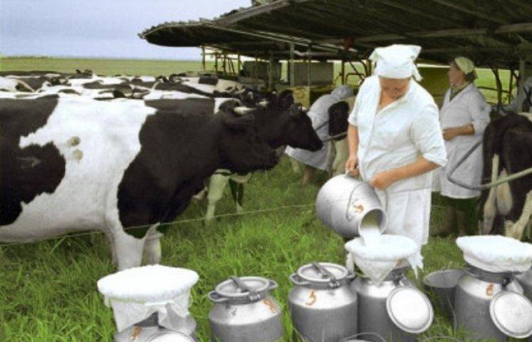 Вінницька область в лідерах за обсягами виробництва м'яса та молока