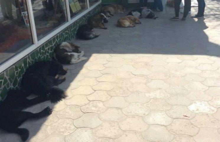 У Сумах бродячі собаки залишилися без нагляду