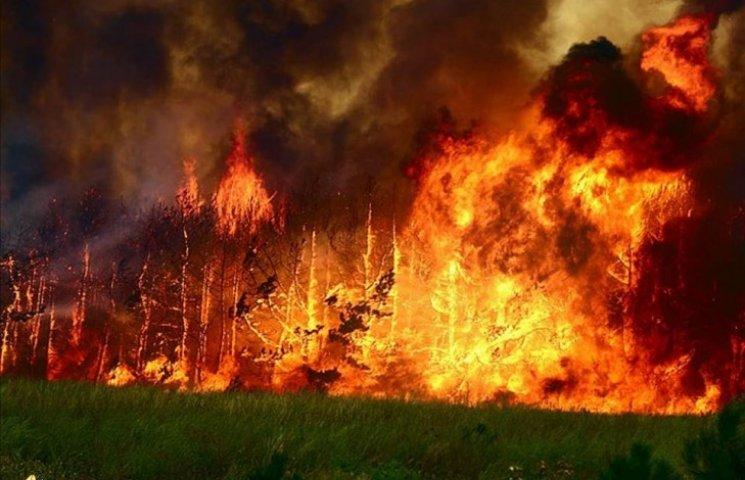 Як війна нищить ліси на Луганщині: сотні гектарів згоріли уздовж лінії зіткнення