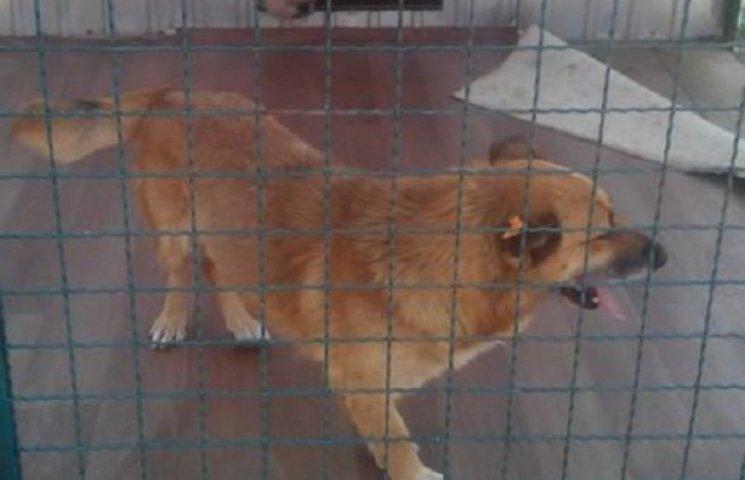Волонтери прооперували собаку після опіки комунальників