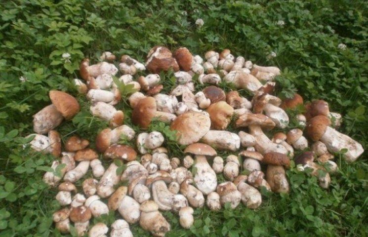 На Буковині з'явилися перші білі гриби