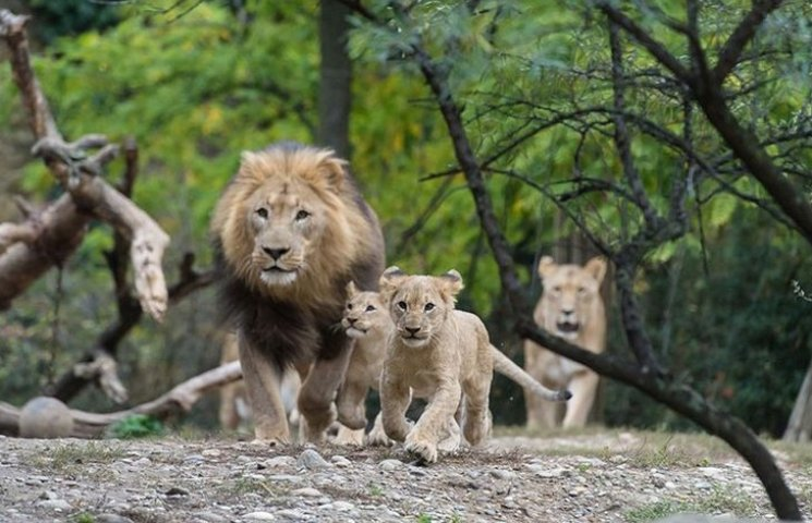 ТОП-8 кумедних і захопливих відео з зоопарків