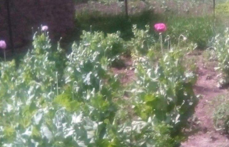 На Миколаївщині чоловік виростив на городі міні-плантацію маку