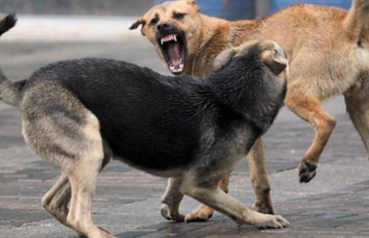 У Миколаєві собака покусала молоду маму, що захищала маленьку доньку