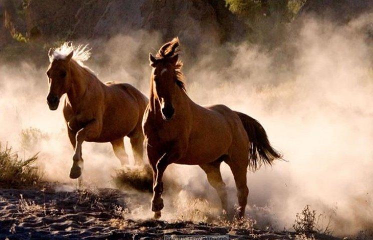 У Миколаєві викрали коней, яких використовують для реабілітації хворих дітей