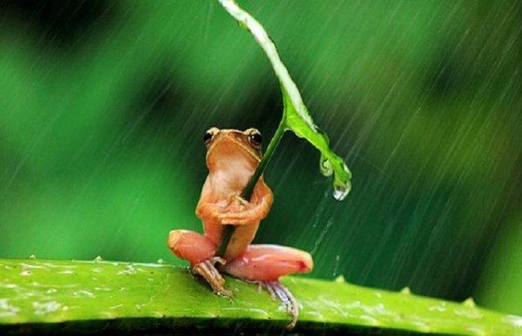 Дрібний дощ у Хмельницькому йтиме майже весь день