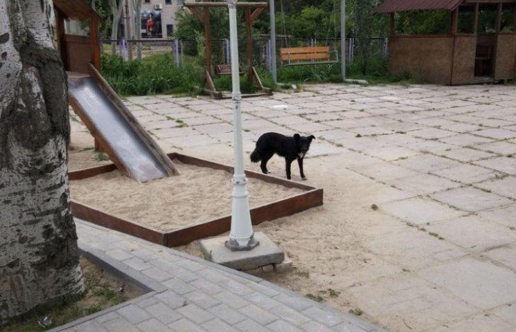 У Миколаєві радника мера з дитиною ледь не погризли собаки