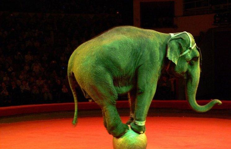 У Миколаєві заборонили пересувні цирки