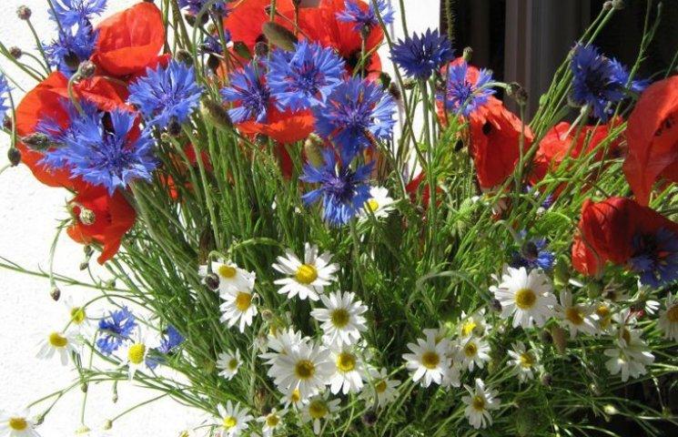 квіти польові картинки