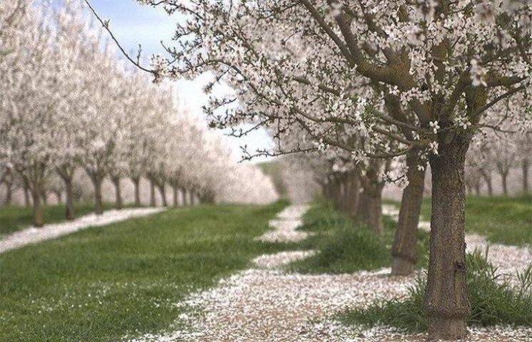 На Хмельниччині хочуть озеленювати міста фруктовими деревами