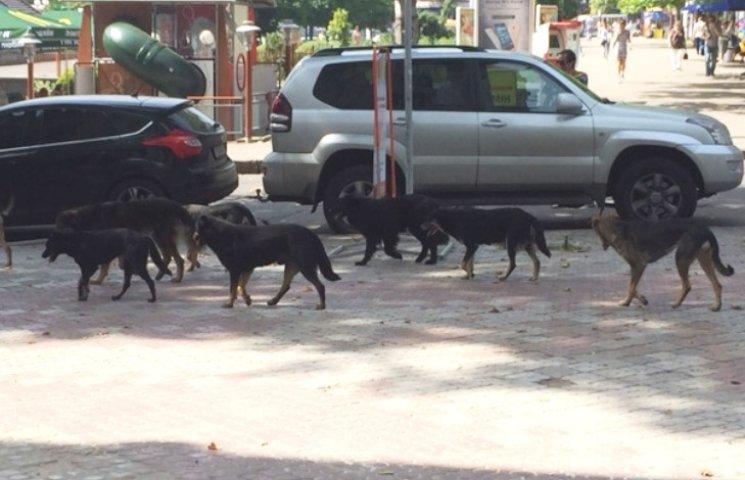 У центрі Миколаєва поліцейські рятували людей від навіженої зграї собак