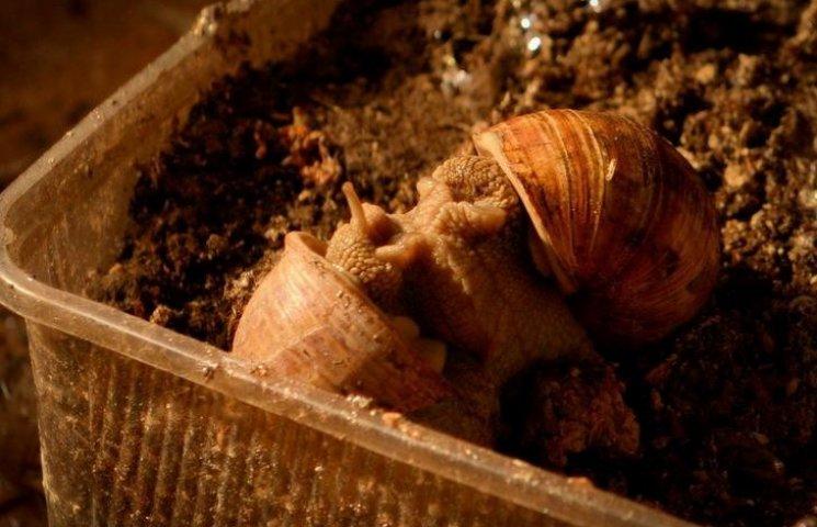Як козятинські молюски роблять їхнього хазяїна мільйонером