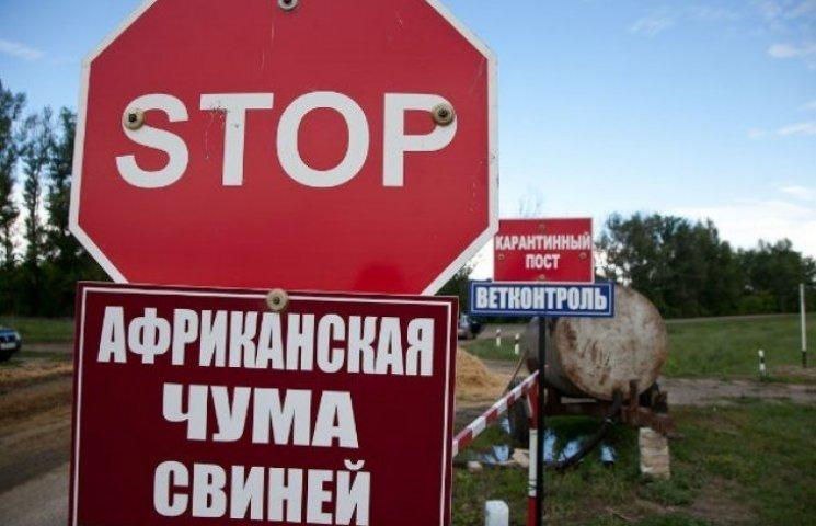 На Миколаївщині зафіксували черговий спалах африканської чуми свиней