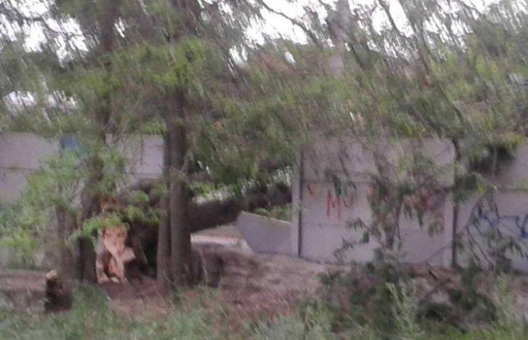 У Миколаєві шквальний вітер повалив дерево біля школи