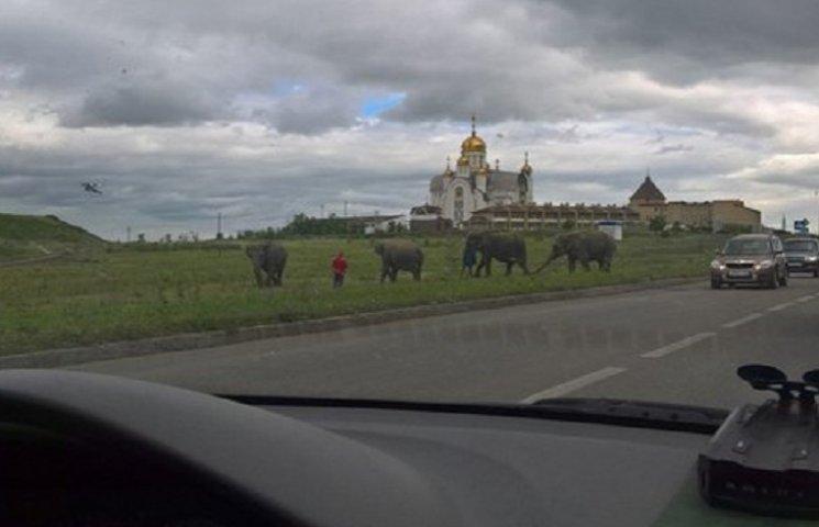 На России вдоль трассы было замечено стадо слонов