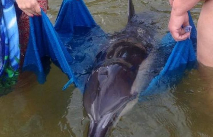 На Николаевском курорте отдыхающие спасли дельфина