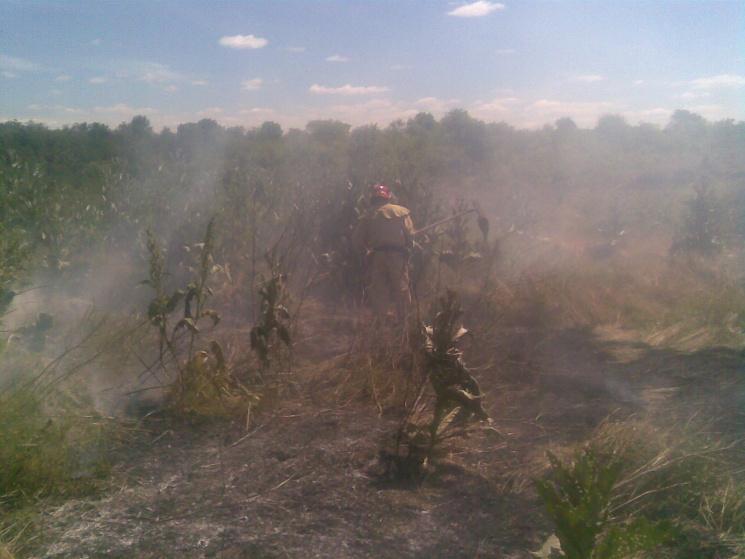 На Херсонщині сталася чергова пожежа у лісництві