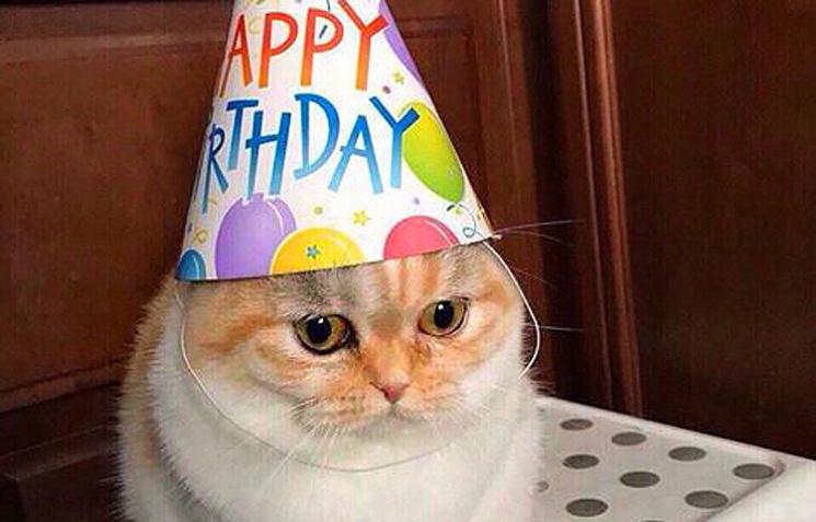 Кот поздравляющий с днем рождения
