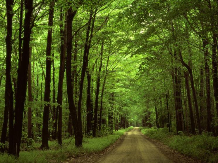 """Для чого 12 червня розкидають квіти, уникають походів у ліс і остерігаються """"зміїної"""" помсти"""