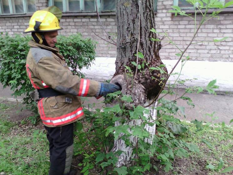 """Результат пошуку зображень за запитом """"рятувальники знищили гніздо шершнів"""""""