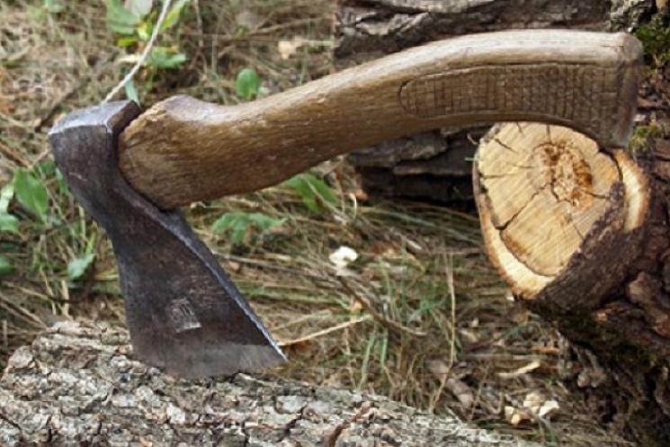 Екологи Тернопільщини виявили незаконну рубку цінних порід дерев
