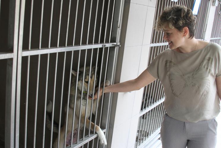 Як у Львові усиновлюють котів і собак