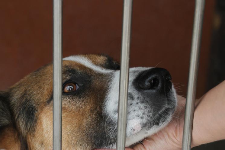 Долучайся: у Львові усиновлюють собак і котів фото 9