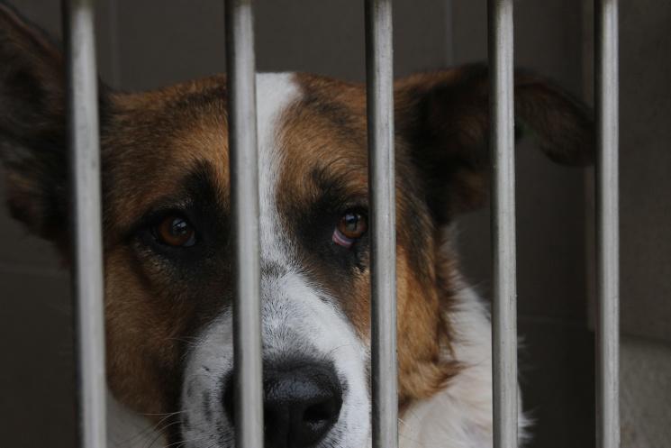 Долучайся: у Львові усиновлюють собак і котів фото 11