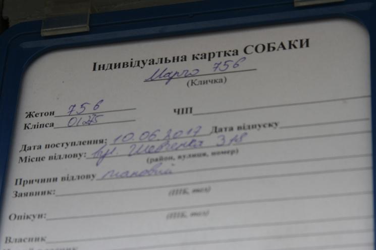 Долучайся: у Львові усиновлюють собак і котів фото 15