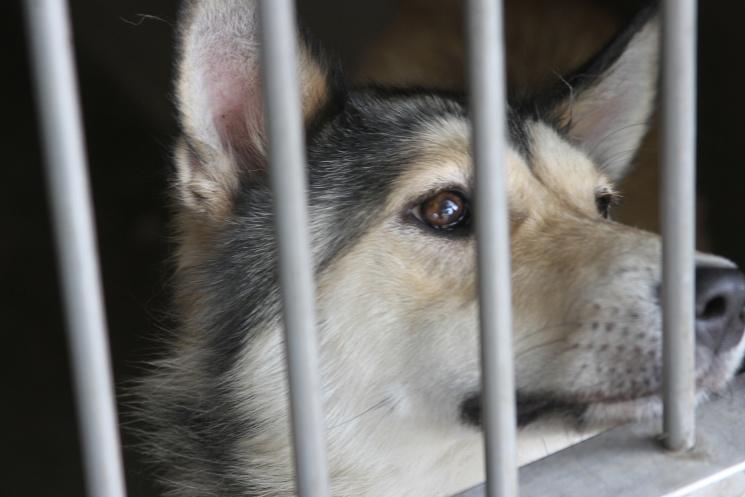 Долучайся: у Львові усиновлюють собак і котів фото 16