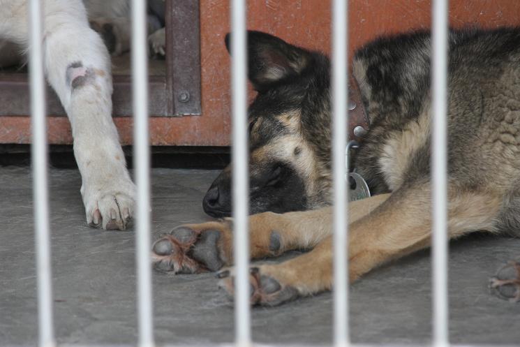 Долучайся: у Львові усиновлюють собак і котів фото 17