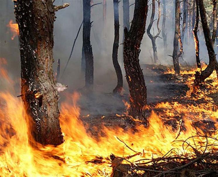 Запорізькі екосистеми за вихідні горіли 31 раз