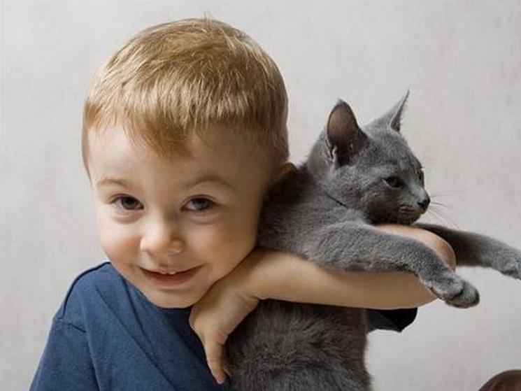 """У програму шкіл Дніпра включать """"котячі уроки доброти"""""""