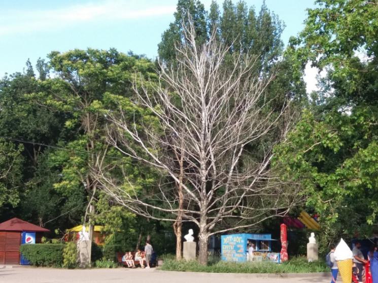 """У центральному парку Мелітополя з'явився """"пам'ятник"""" висохлій березі"""