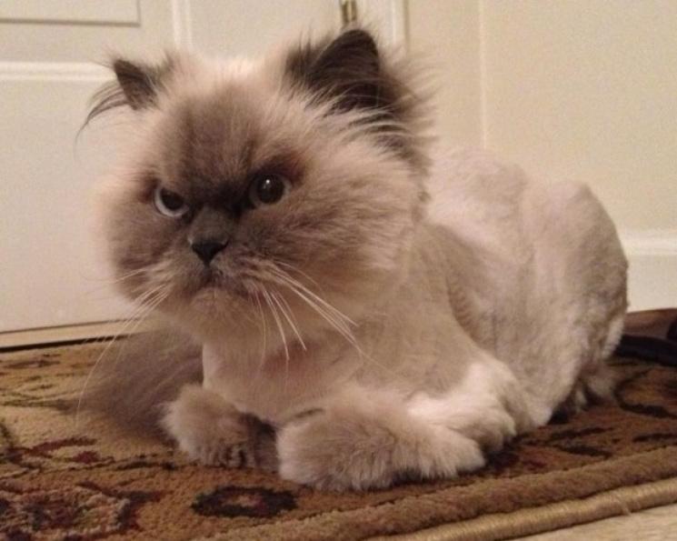 Как выглядят коты, которым очень не пове…