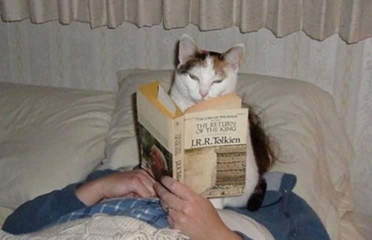 Коли коти впевнені,що вони - центр всесвіту (ФОТО)