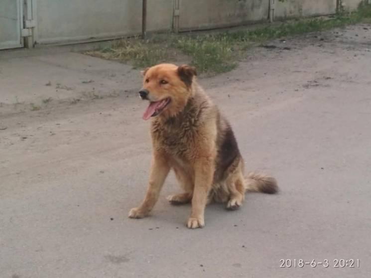 У Мелітополі загублений пес декілька днів не сходить з місця (ФОТО)