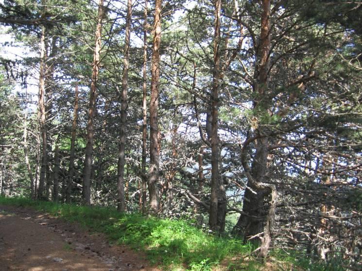 У Криму ліси закрили для людей
