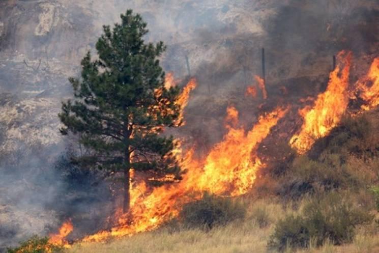 В Закарпатській області збережеться надзвичайно висока та висока пожежна небезпека
