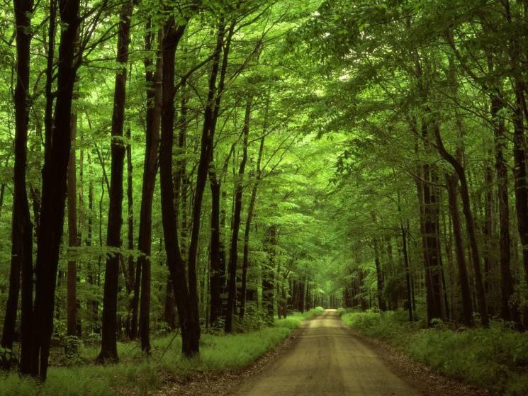 Чому 12 червня варто уникати прогулянок у лісі та остерігатися зміїних родичів