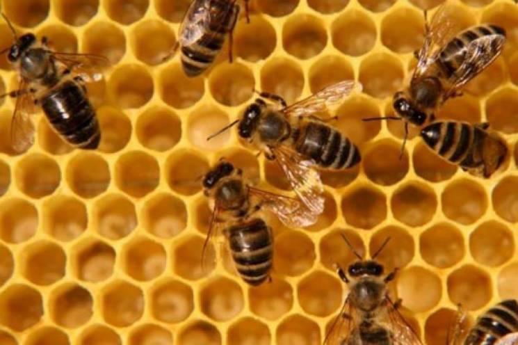 Поліція Тернопільщини розслідує обставини масової загибелі бджіл