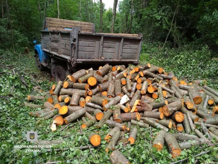 """У селі на Полтавщині впіймали """"вбивців"""" лісу (ФОТО)"""