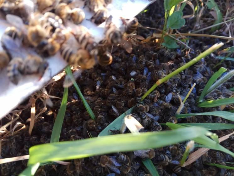 На Харківщині селяни звинуватили агрофірму у масовому отруєнні бджіл (ФОТО)