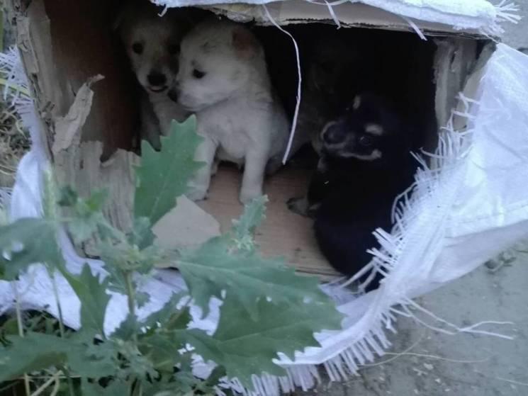 У Мелітополі невідомі викинули на звалище цуценят в мішку (ФОТО)