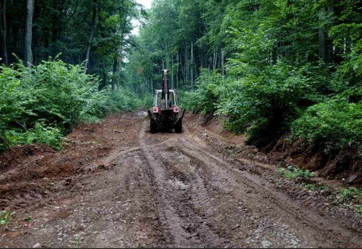 На Ужгородщині лісівники старанно відновлюють дорогу до гори Маковиця (ФОТО)
